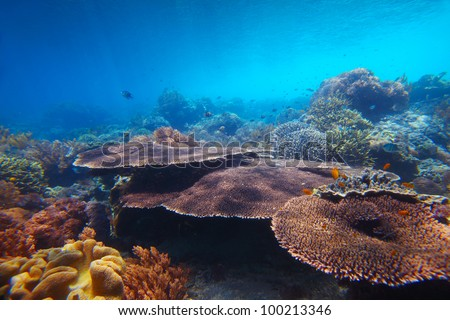 Underwater shoot of vivid coral reef with a large Table corals on foreground - stock photo