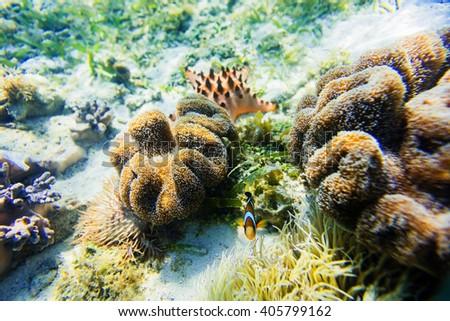 Underwater shoot sea anemon - stock photo