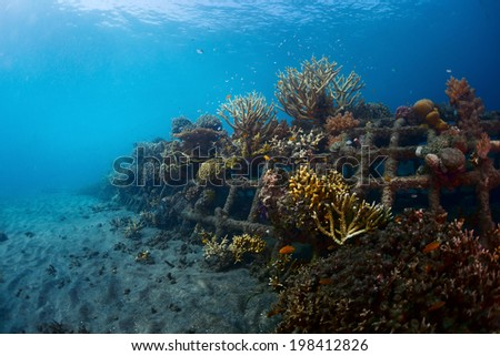 Underwater shot of metal structures with planted corals in Biorock restoration area in the village of Pemuteran. Bali - stock photo
