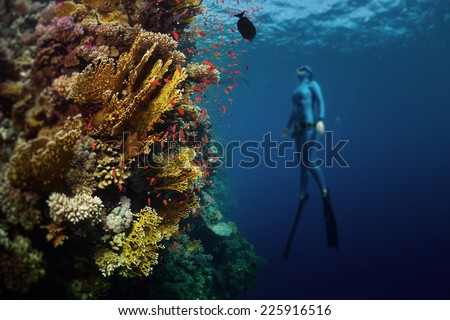 Underwater shot of the lady free diver ascending along the vivid coral reef. Focus on the corals, diver is blurred. Red Sea, Egypt - stock photo