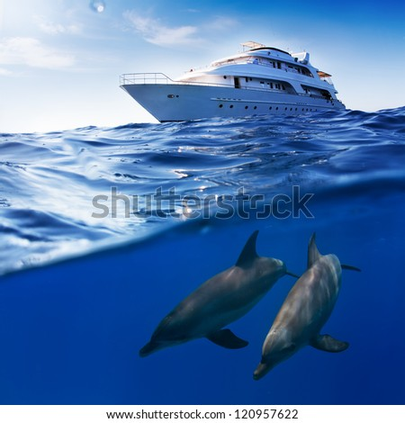 Underwater splitted by waterline template. Two bottlenose dolphins swimming under boat - stock photo