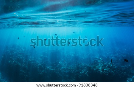 Underwater, Tropical Reef - stock photo