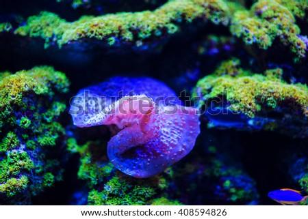 Underwater, Underwater World, Coral Reef - stock photo