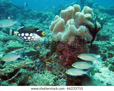 underwater vector of tropical fishes and scuba diver / Similan, Thailand - stock photo