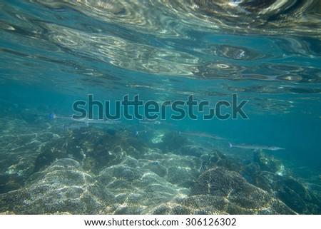 Underwater view of fish and ocean floor, Zihuatanejo, Guerrero, Mexico - stock photo