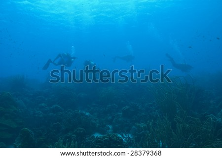 underwater view of group of people in scuba diving gear floating in blue ocean water around island of bonaire, dutch antilles, caribbean sea