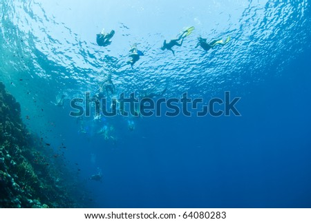 Underwater view of snorkelers at the water surface. Gordon reef, Straits of Tiran, Red Sea, Egypt.