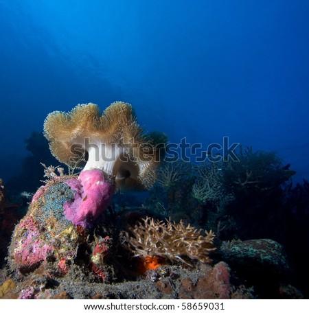 Underwater world - stock photo