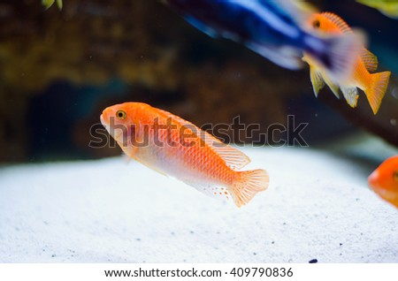 Underwater World aquarium - stock photo