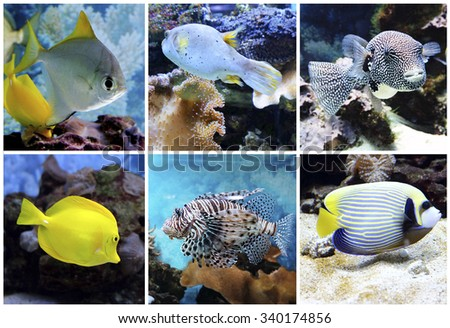 Underwater world - exotic fishes in an aquarium - stock photo