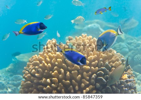 Underwater world. Fishes in corals
