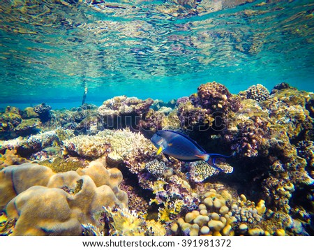 Underwater world of the Red Sea in Egypt. Corals and fish - stock photo
