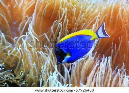 underwater world paints - stock photo