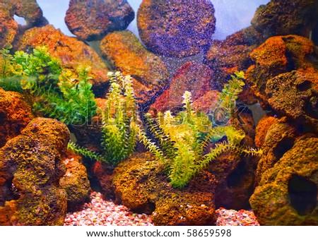 Underwater world with stones - stock photo