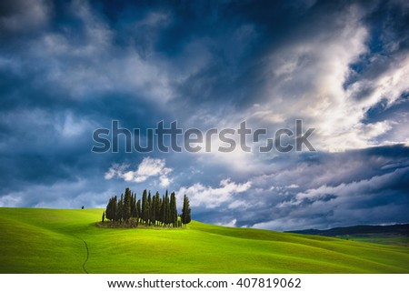 Unearthly green landscapes of Tuscany, a group of cypress trees on a spring field. - stock photo