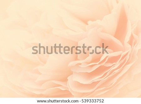 Unfocused blur rose petals, toned, light and heart bokeh background, pastel and soft card