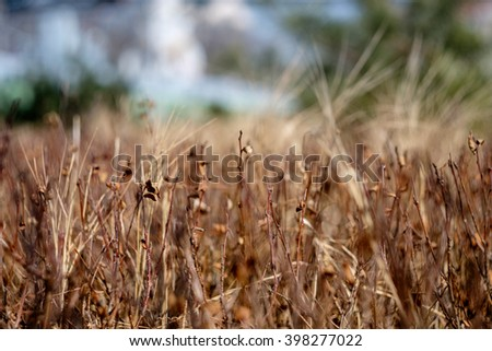unfocused field of grass during sunset ,vintage tone, bokeh - stock photo