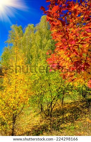 Unforgettable golden autumn. - stock photo