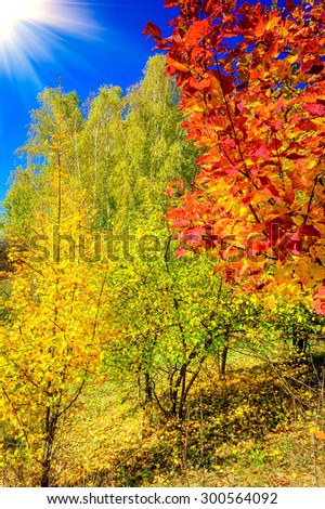 Unforgettable golden autumn. - stock photo