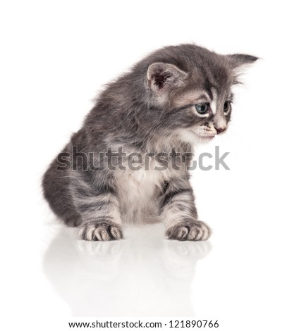 Unfortunate little kitten isolated on white background