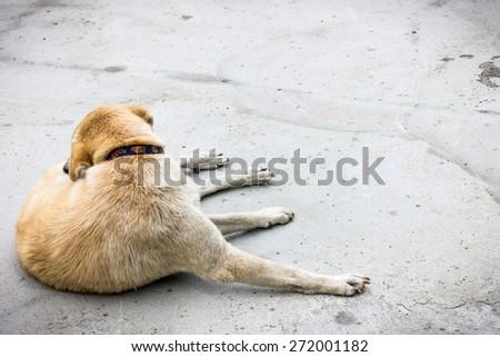 unhappy dog lay down on the floor - stock photo