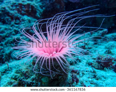 Unidentified soft coral on the sea bed. - stock photo