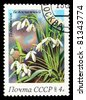 UNION OF SOVIET SOCIALIST REPUBLICS - CIRCA 1983: A stamp from the USSR from the spring flowers series shows image of snowdrops (Galanthus), circa 1983 - stock photo