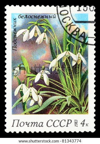 UNION OF SOVIET SOCIALIST REPUBLICS - CIRCA 1983: A stamp from the USSR from the spring flowers series shows image of snowdrops (Galanthus), circa 1983