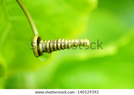 Unique tendril branch - stock photo