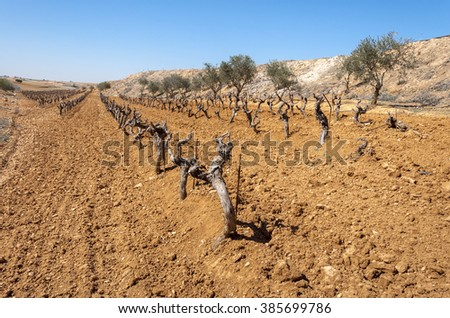 Unirrigated vineyards in a small field. Photo take in Toledo Province, Spain - stock photo