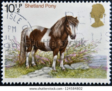 UNITED KINGDOM - CIRCA 1978: stamp printed in Great Britain shows a Sheltand pony, circa 1978 - stock photo