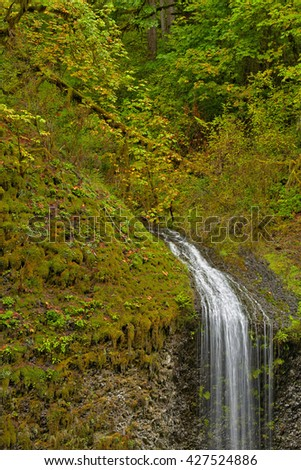 Unknown waterfall, Silver Falls State Park - stock photo