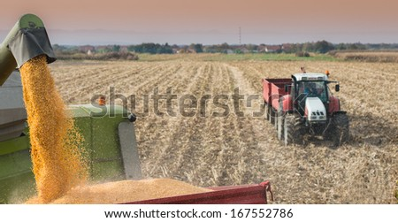 Unloading a bumper crop of corn after harvest - stock photo