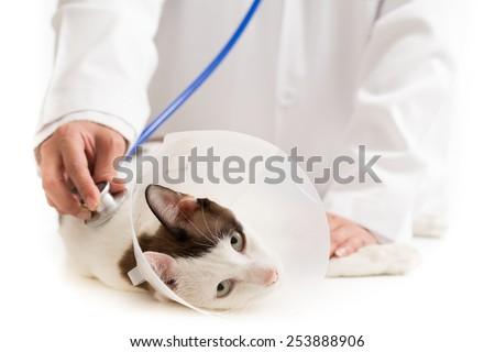 Unrecognizable vet listens a sick feline - stock photo