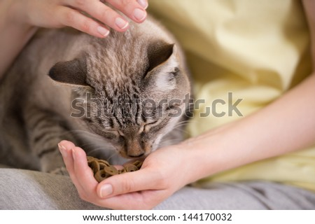 Unrecognizable woman feeding her tabby cat at home - stock photo