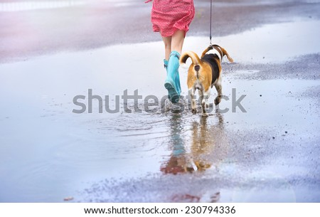 Unrecognizable young woman in dress and blue wellies walk her beagle dog in street - stock photo