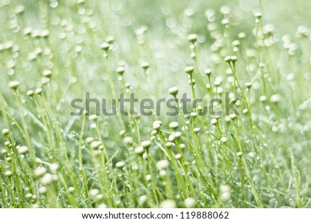 Unripe Spring flowers with beautiful background - stock photo