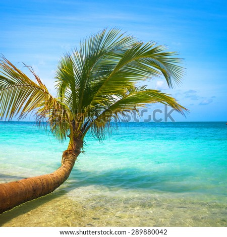 Untouched tropical beach in Maldives - stock photo