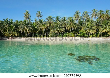 Untouched tropical shore of an island of the Caribbean sea with lush vegetation, viewed from the sea, cayos Zapatilla, Bocas del Toro, Panama - stock photo