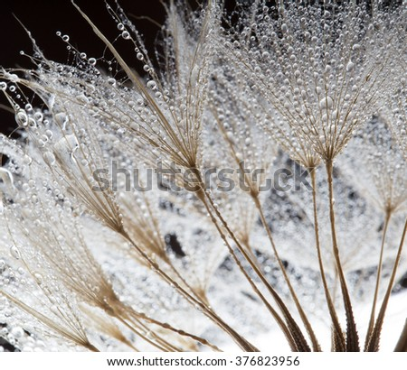 Unusual abstract macro photo. Plant's seeds with water drops. The unusual composition - stock photo