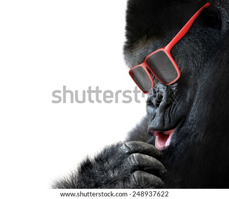 Unusual animal fashion; closeup of gorilla face with red sunglasses - stock photo