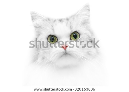 Unusual close-up cat portrait, black and white photo with colored eyes and nose, shallow DOF - stock photo