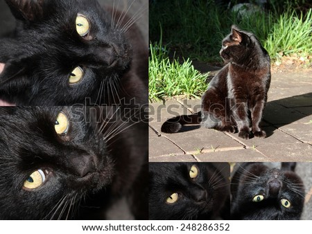 Unusual collage of a shiny coated  friendly black Bombay male cat with pale amber  eyes  sitting on the tiles by   the fresh green grass in early winter. - stock photo