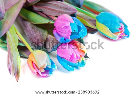 Unusual multicolored tulips