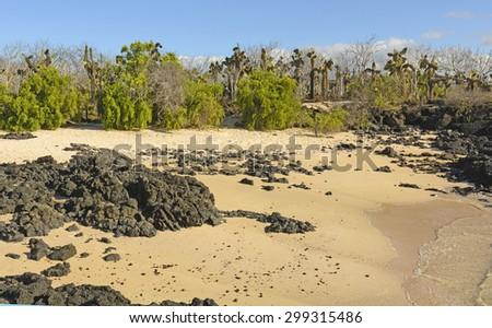 Unusual Vegetation on a Tropical Beach on Santa Cruz Island in the Galapagos - stock photo