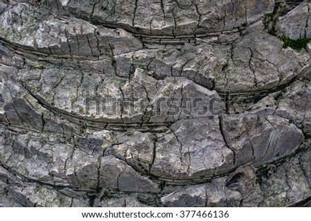 Unusual wooden texture, pattern of palm tree trunk - stock photo