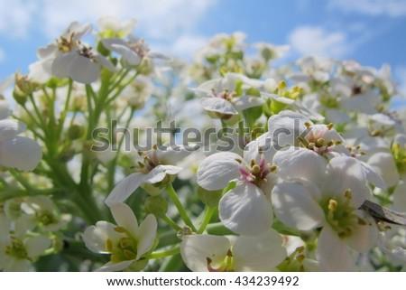 unusually light flowers on bright blue sky. - stock photo