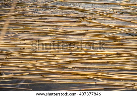Unwrought dried reed on the lake shore background. Texture of the dry Yellow cane in the water. Natural abstract striped pattern with place for your own text. Background of dry stalks of cane closeup. - stock photo