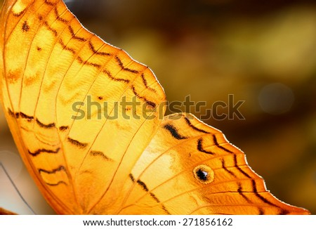 Up close: The beauty of butterfly wings - stock photo