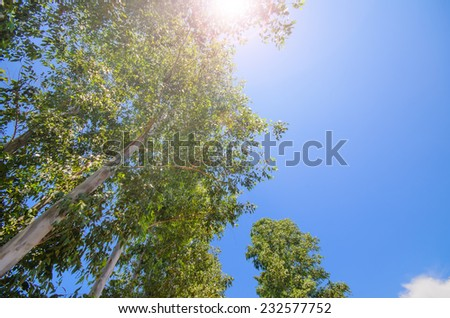 Up view on tree and clouds on blue sky - stock photo